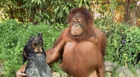 12 clip duoc chia se nhieu nhat mang xa hoi nam 2015 - Anh 1