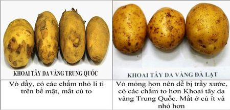 Tay chay khoai Trung Quoc nhai hang Viet - Anh 2