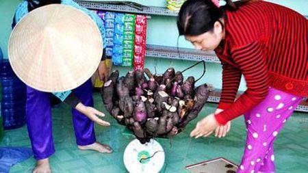 Ngam quai qua dot bien ky la o Viet Nam - Anh 8
