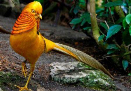 'Ty phu' choi chim vung chiem trung - Anh 2