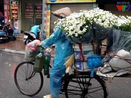 Cuc hoa mi tinh khoi mang mua dong ve pho - Anh 10