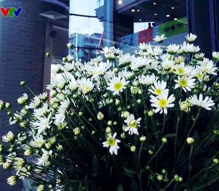 Cuc hoa mi tinh khoi mang mua dong ve pho - Anh 2