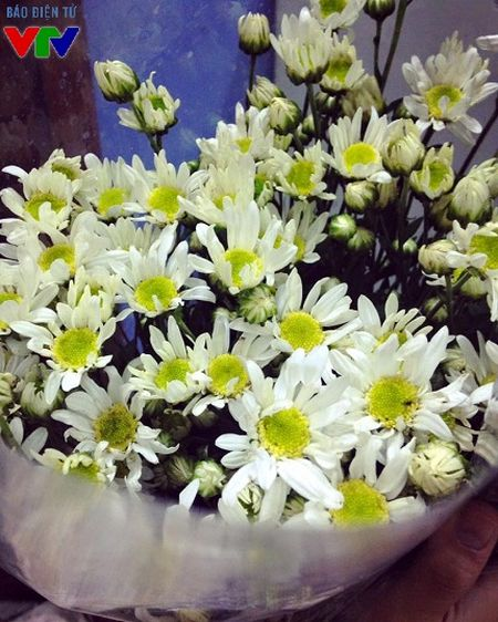 Cuc hoa mi tinh khoi mang mua dong ve pho - Anh 3