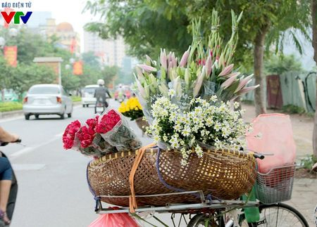 Cuc hoa mi tinh khoi mang mua dong ve pho - Anh 7