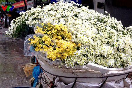 Cuc hoa mi tinh khoi mang mua dong ve pho - Anh 8