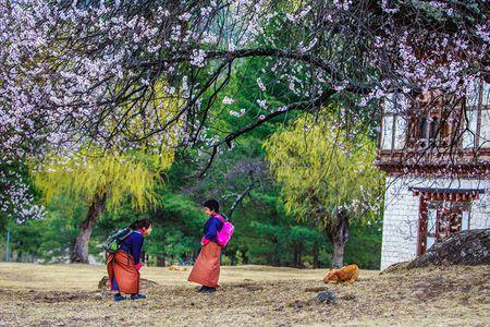 Ve dep xu so Bhutan qua goc nhin nhiep anh gia Viet - Anh 2