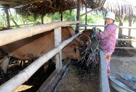 Chuyen doi o Ninh Thuan: Trong co tiet kiem nuoc - Anh 2