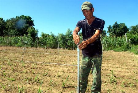 Chuyen doi o Ninh Thuan: Trong co tiet kiem nuoc - Anh 3