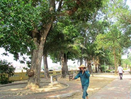 Ky bi khu di tich Nguyen Du - Anh 2
