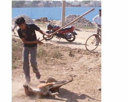 Lao dong VN bi bat o Dai Loan vi chup hinh hanh ha cho - Anh 1