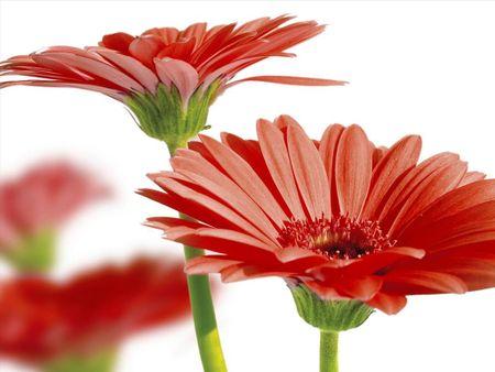 Nhung loai hoa mang tien tai cho gia chu ngay Tet - Anh 1