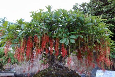 Nhung loai hoa mang tien tai cho gia chu ngay Tet - Anh 2