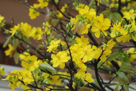 Nhung loai hoa mang tien tai cho gia chu ngay Tet - Anh 4
