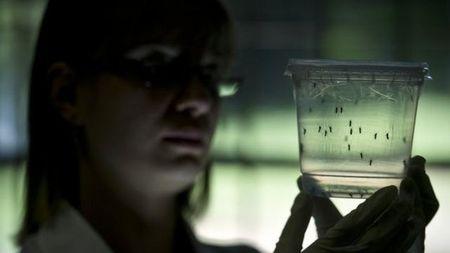 """7 dieu can biet ve virus """"an nao"""" Zika dang lan toan cau - Anh 2"""