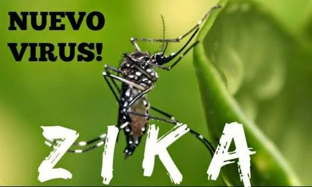 Bo Y te hop khan phong chong vi rut Zika - Anh 1