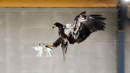 "Ha Lan huan luyen dai bang de ""diet"" drone - Anh 1"