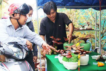 "Kieng bonsai linh chi hut khach vi ""doc"", la - Anh 2"