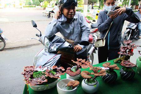 "Kieng bonsai linh chi hut khach vi ""doc"", la - Anh 3"