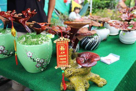 "Kieng bonsai linh chi hut khach vi ""doc"", la - Anh 6"
