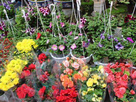 6 cho hoa Tet noi tieng cua Ha Noi - Anh 6