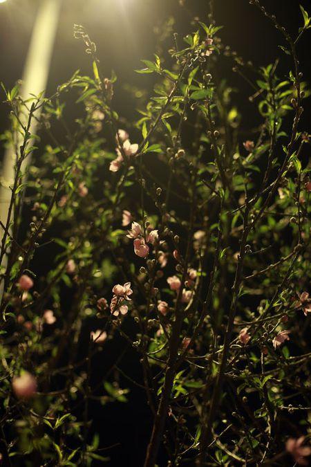 Cho hoa dao dem nhon nhip ngay cuoi nam - Anh 7