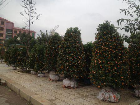 Quang Binh: Hoa Tet tran ngap khap TP Dong Hoi - Anh 2