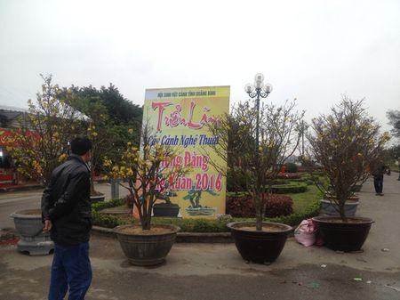 Quang Binh: Hoa Tet tran ngap khap TP Dong Hoi - Anh 5