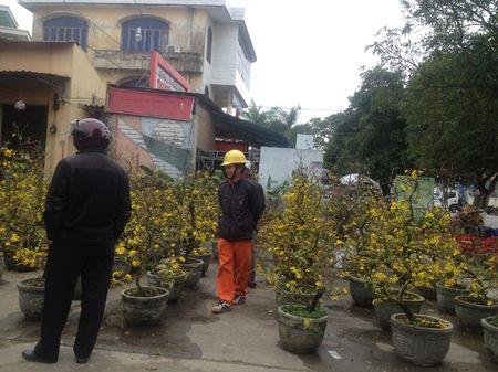 Quang Binh: Hoa Tet tran ngap khap TP Dong Hoi - Anh 6