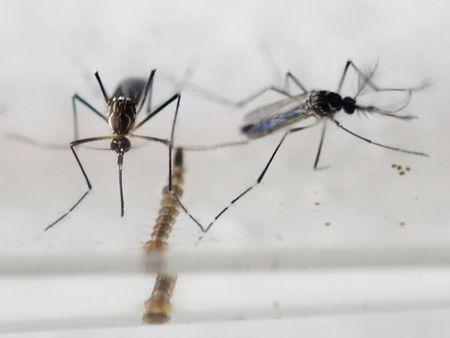 Thai Lan, Uc da co nguoi nhiem virus Zika; Viet Nam khuyen cao han che du lich... - Anh 1