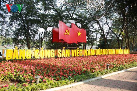 Chom sao Tet Binh Than - Anh 1