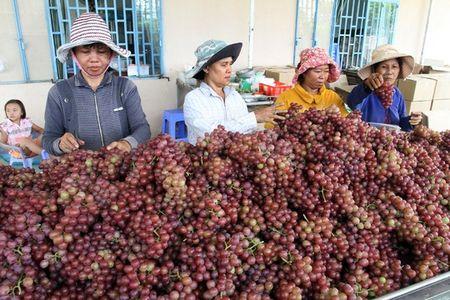 'Nu hoang' Ninh Thuan lam thang tram - Anh 2