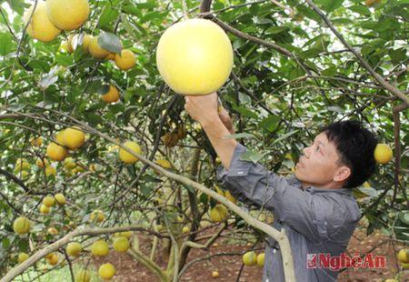 Nhung 'ong chu lon' tren dong ruong thue muon - Anh 4