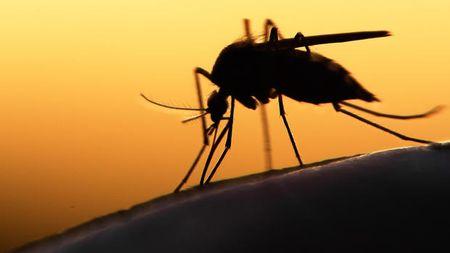 Virus Zika co the gay roi loan than kinh nghiem trong - Anh 1
