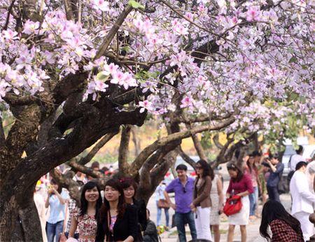 Ghe tham nhung cung duong ruc ro hoa ban giua long Ha Noi - Anh 1