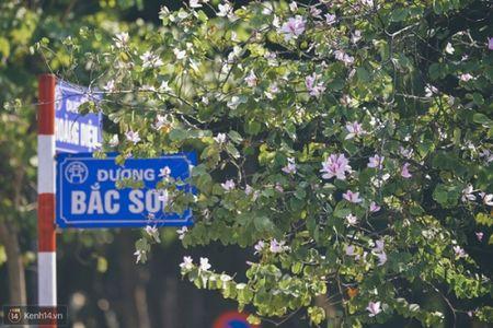 Ghe tham nhung cung duong ruc ro hoa ban giua long Ha Noi - Anh 2