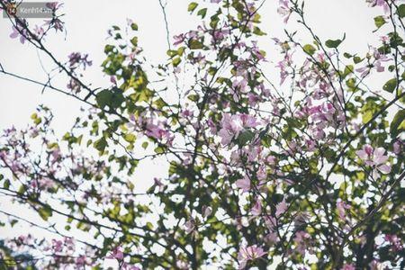 Ghe tham nhung cung duong ruc ro hoa ban giua long Ha Noi - Anh 4