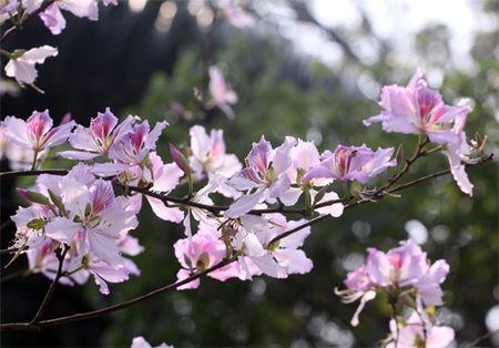 Ghe tham nhung cung duong ruc ro hoa ban giua long Ha Noi - Anh 6