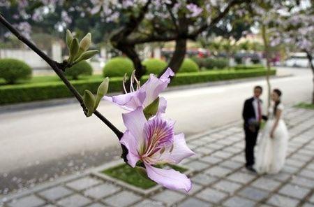 Ghe tham nhung cung duong ruc ro hoa ban giua long Ha Noi - Anh 7