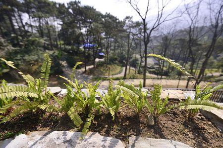 Toan canh resort hoanh trang khong phep o Ba Vi - Anh 13