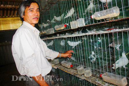 Chuong nuoi bo cau 'tien loi' cua lao nong thanh pho - Anh 2