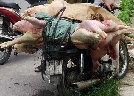 Nam Dinh: Bat giu doi tuong dang cho hon 1 ta lon chet di tieu thu - Anh 1