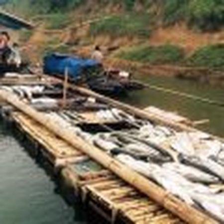 Ngu dan Canh Duong de nghi dung hoat dong cua Formosa - Anh 3