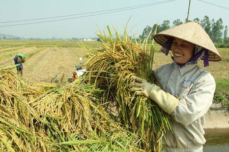 Tang kha nang canh tranh cho san pham lua gao - Anh 1