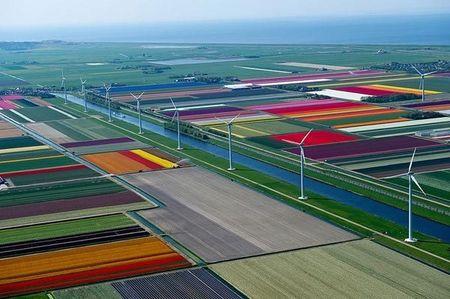 Ngo ngang ngam canh dong mau sac ruc ro o xu so hoa tulip - Anh 7