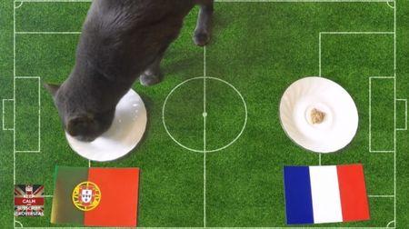 Chung ket EURO 2016 Phap-Bo Dao Nha: Meo Cass du doan the nao? - Anh 1