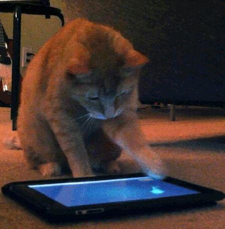 Xem lu meo dap pha iPhone, iPad khong tiec tay - Anh 2