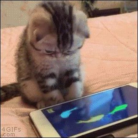 Xem lu meo dap pha iPhone, iPad khong tiec tay - Anh 4