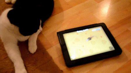 Xem lu meo dap pha iPhone, iPad khong tiec tay - Anh 9