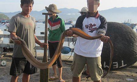 Ban mang san thuong luong bien - Anh 3