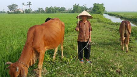 Cau chuyen ve ba cu chet di song lai o Ninh Binh khien ai cung kinh ngac - Anh 3